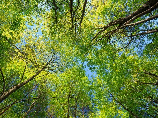 Messa in sicurezza del Patrimonio Arboreo